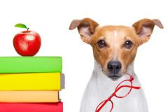 Smart dog and books stock photo