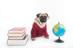 Smart dog. Stock Images