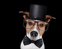 Smart dog isolated on black Stock Images