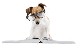 Smart dog reading book. Cool pet study student. Back to school Royalty Free Stock Photography