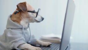 Smart dog using computer.