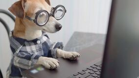 smart dog working with computer wearing glasses