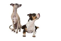 Smart dogs Stock Images