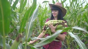 Smart eco harvesting agriculture farming concept . farmer girl plant researcher harvesting corn cobs on the farm