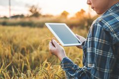 Smart farming Agricultural technology and organic agriculture Woman using the research tablet and studying the development royalty free stock images