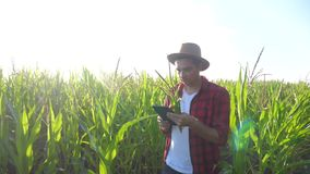 Smart farming concept slow motion video. Agronomist man holds tablet touch pad computer in the corn field is lifestyle. Studying and examining crops before stock video