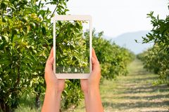 Smart farming and digital agriculture concept. royalty free stock image