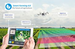 Smart farming 4.0 , Hi-Tech Agriculture conceptual, Drone AI automatic stock images
