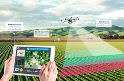 Smart farming, Hi-Tech Agriculture conceptual royalty free stock image