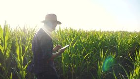 Smart farming slow lifestyle motion video concept. man agronomist holds tablet touch pad computer in the corn field is. Smart farming slow lifestyle motion video stock video footage
