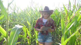 Smart farming slow motion video concept. Girl agronomist holds tablet touch pad computer in the corn field is studying. Smart farming slow motion video concept stock video