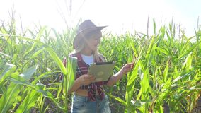 Smart farming slow motion video concept. girl agronomist holds tablet touch pad computer in the corn field is studying. Smart farming slow motion video concept stock video footage