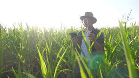 Smart farming slow motion video concept. Man agronomist holds tablet touch pad computer in the corn field is studying. Smart farming slow motion video concept stock footage
