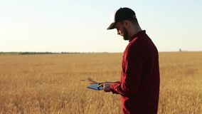 Smart farming using modern technologies in agriculture. Agronomist farmer holds and touch digital tablet computer. Display in wheat field using apps and stock video footage
