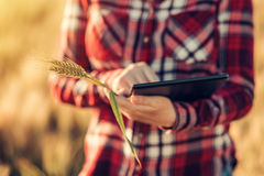 Smart farming, using modern technologies in agriculture. Female agronomist farmer with digital tablet computer in wheat field using apps and internet in Stock Images