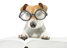 Smart fun dog is Studying Royalty Free Stock Photography