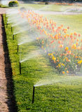 Smart garden luxury park with automatic sprinkler irrigation system. Smart garden Automatic sprinkler irrigation system working early in the morning in green royalty free stock photography