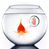 Smart Gold fish. In bowl thinking about sales growth Royalty Free Stock Photos