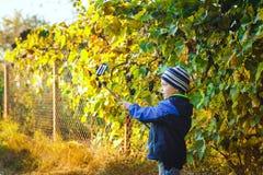 Smart happy little boy taking selfie Royalty Free Stock Images
