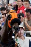 Smart Horse stock photos