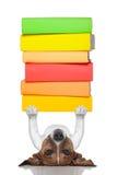 Smart hund Arkivfoton