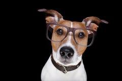 Smart hund som isoleras på svart Arkivfoto