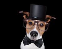 Smart hund som isoleras på svart Arkivbilder