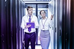 Smart intelligent colleagues working together in pair stock photos