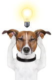 Smart intelligent dog Stock Photo