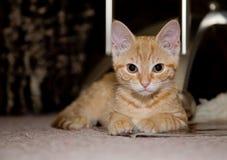 Smart kitty Stock Photos