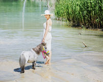 Smart lady walking with the little horse Royalty Free Stock Images