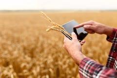 Smart lantbruk genom att använda moderna teknologier i jordbruk Man agronombonden med den digitala minnestavladatoren i vete Royaltyfri Foto