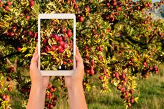 Smart lantbruk och digitalt åkerbrukt begrepp royaltyfri foto