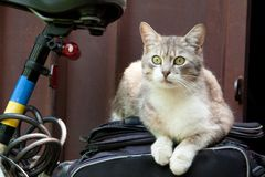 Smart look green-eyed cat on bicycle Royalty Free Stock Images