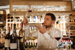 Smart nice man looking at the wine. Professional sommelier. Smart nice man looking at the wine while checking its quality stock image