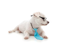 Smart pet dog looking at your message stock image