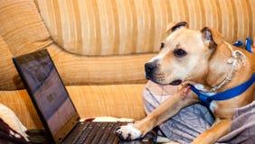 Smart pet dog using laptop computer stock photos