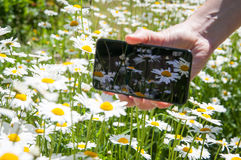 Smart phone and daisies Stock Image