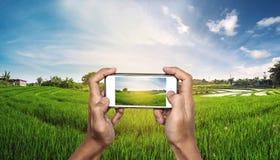 Smart Phone a disposizione con panorama del giacimento del riso nel tramonto Fotografie Stock