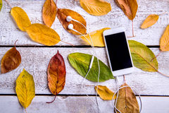 Smart phone, earphones and autumn leaves. White wooden backgroun Stock Photography