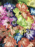 Smart phone image of different colored daisies in a bunch Royalty Free Stock Photography