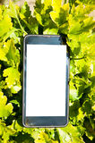 Smart phone between leaves Royalty Free Stock Photography