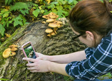 Young Woman taking Nature Picture with cell phone Stock Photo