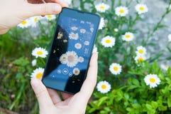 Smart phone snapshot. Of daisies Royalty Free Stock Photo