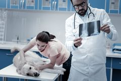 Smart professional veterinarian putting a diagnosis. Medical examination. Smart professional male veterinarian holding an X ray image and putting a diagnosis royalty free stock photography