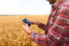 Smart que cultiva usando tecnologías modernas en agricultura Sirva al granjero del agrónomo con la tableta digital en trigo fotos de archivo libres de regalías