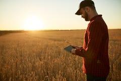 Smart que cultiva usando tecnologías modernas en agricultura Sirva al granjero del agrónomo con la tableta digital en trigo imagen de archivo