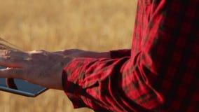 Smart que cultiva usando tecnologias modernas na agricultura As mãos do fazendeiro tocam na exposição de tablet pc digital com de vídeos de arquivo