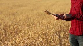 Smart que cultiva usando tecnologias modernas na agricultura As mãos do fazendeiro tocam na exposição de tablet pc digital com de filme