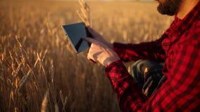 Smart que cultiva usando tecnologias modernas na agricultura As mãos do fazendeiro tocam na exposição de tablet pc digital com de video estoque